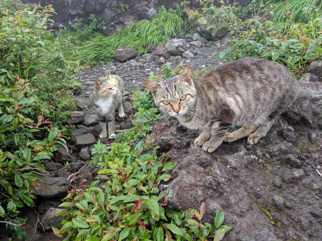 金時山山頂の猫
