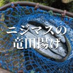 ニジマス 竜田揚げ